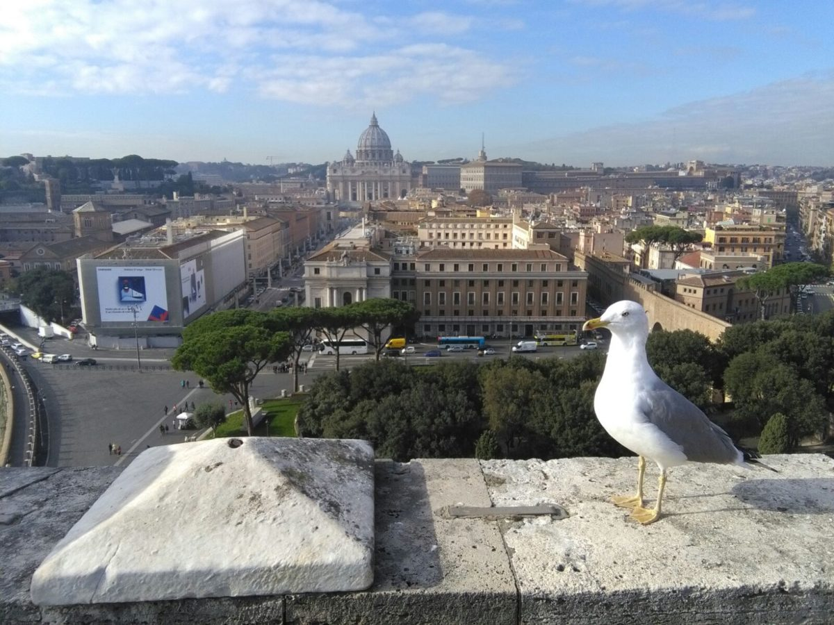 Saint Peter's and Vatican City Rome seen from Castel Sant'Angelo